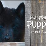 2019 Puppy Calendar