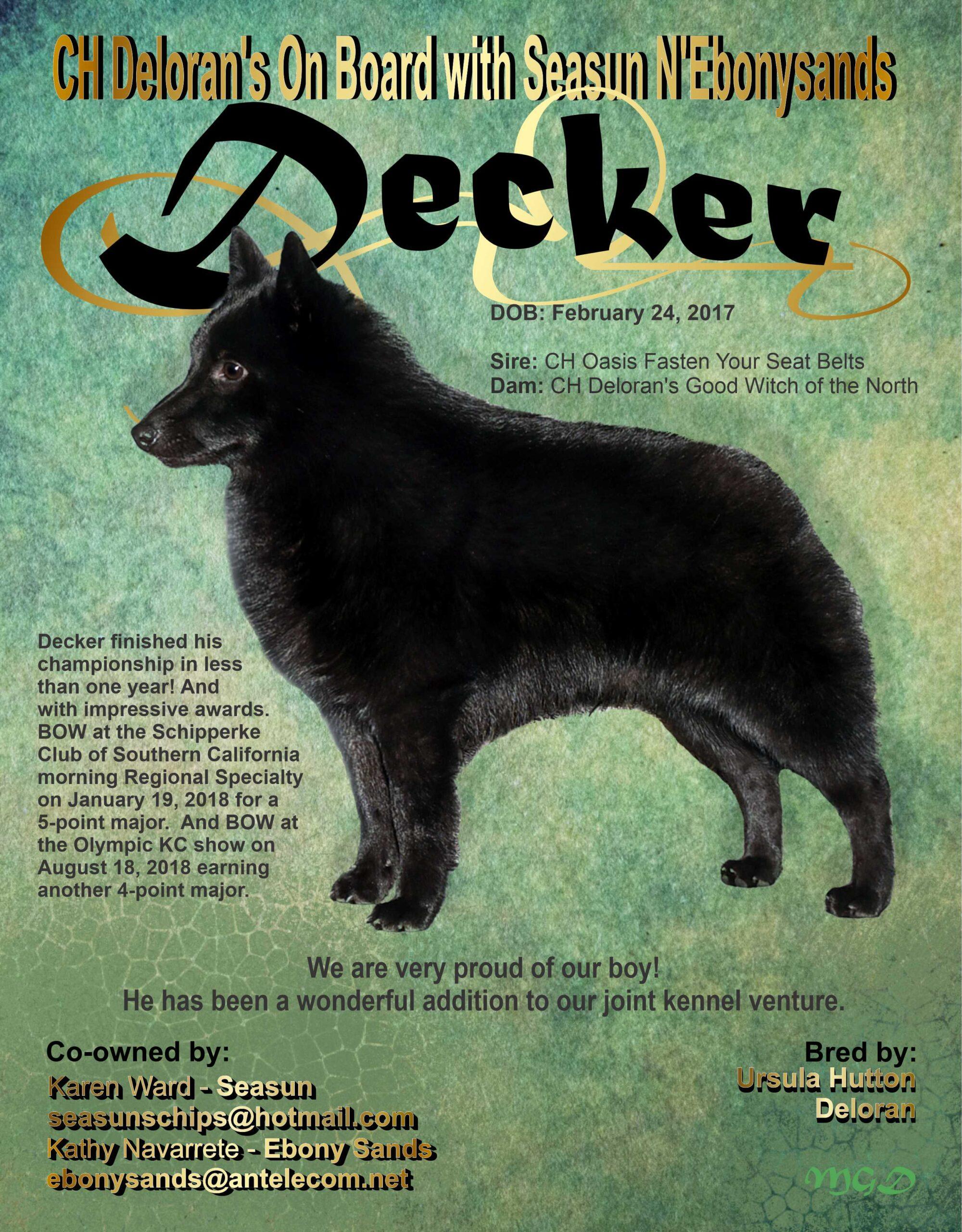 #8 Bulletin Spring 2021 -Decker – Ward Draft One FINAL
